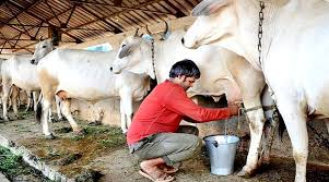 bhopal, Central Semen Institute, plays, leading role, milk production , breed improvement